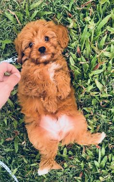 60 funny furry animals to brighten your day - GIRL ROOM - . - 60 funny furry animals to brighten your day – GIRL ROOM – - Super Cute Puppies, Cute Baby Dogs, Cute Funny Dogs, Cute Little Puppies, Cute Dogs And Puppies, Cute Little Animals, Cute Funny Animals, Doggies, Cute Pups