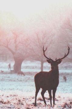 Beautiful winter photo of this deer