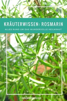 Kräuterwissen: Rosmarin - Jules Moody Everything worth knowing about rosemary as a medicinal herb! Natural Farming, Natural Garden, Organic Farming, Organic Gardening, Herbal Tea Benefits, Herbal Teas, Diy Projects For Beginners, Real Plants, Tea Blends