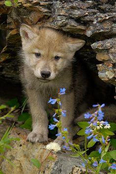 ~~Wolf Pupby Jeff Wendorff~~