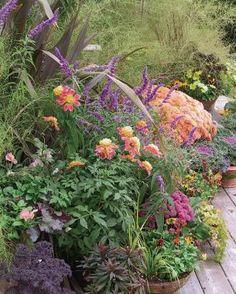❤ =^..^= ❤ PLANT KEY 1. Phormium tenax  'Atropurpureum' 2. Salvia leucantha 3. Chrysanthemum 'Luciane' 4. Chrysanthemum 'Valerie' 5. Lysimachia nu...