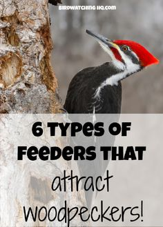 If you want to attract woodpeckers to your backyard these are 6 different styles of bird feeders that they will love. These are great for anyone who enjoys bird watching and feeding birds.