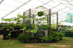 Fernatix were awarded a Gold Medal and the prestigious New Design Award, inside the Floral Marquee, at the RHS Hampton Court Palace Flower Show 2017. Green Plants, Green Flowers, Green Leaves, Hampton Court Flower Show, Rhs Hampton Court, Design Awards, Palace, Outdoor Structures, Display