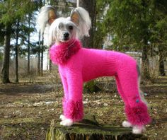30 Knitted Hats and Sweaters for Cats and Dogs, Modern Pet Design Ideas – Lushome Crochet Dog Sweater, Pink Sweater, Pet Sweaters, Chinese Crested Dog, Dog Items, Pet Fashion, Pink Dog, Pet Clothes, Dog Clothing