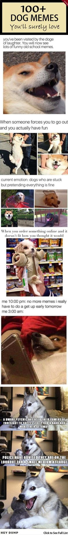100+ DOG Memes That Are Too Funny To Handle #funny #funnymemes #dog #animals #haha #cute #sarcasm #lol #rofl #humor Old Memes, Funny Memes, Hilarious, Fresh Memes, To Loose, Sarcasm, Haha, Handle, Humor