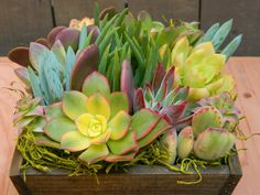 Mother's Day Gift Mothers Day Springtime Succulent by tobieanne