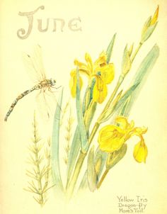 June - The Nature Notes of an Edwardian Lady - Edith Holden