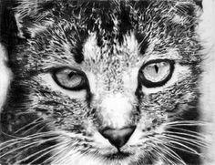 Tabby Cat | Flickr - Photo Sharing!