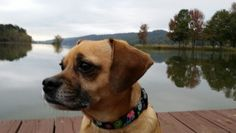 Taking in the Lake at Aunt Debs