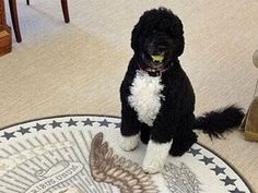 'Mean Girls' fan Bo Obama is making 'fetch' happen (Photo: White House / Instagram)