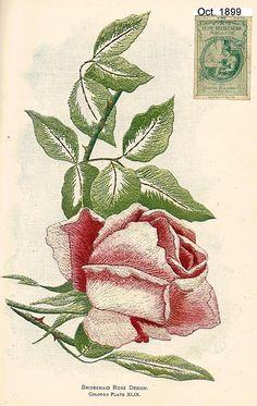 Florence XLIX 1899 | Embroiderist | Flickr