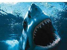underwater - Google zoeken