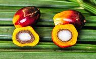 Looking at Oil Palm's Genome for Keys to Productivity - NYTimes.com