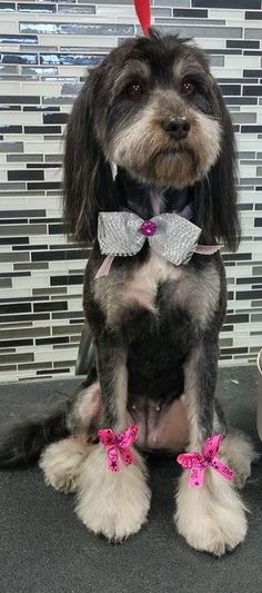 Another cutie Dog Grooming Styles, Grooming Shop, Schnauzers, Fur Babies, Terrier, Mermaid, Pets, Animales, Animals And Pets
