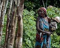 Aweer or Boni tribe. Near extinction.  Article on their way of life as honey hunters