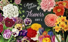 Cottage Garden Flowers Set 1 @creativework247