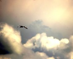 sky scenery picture nature photography bird by Suzannasi on Etsy