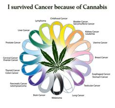 Cancer and Cannabis | Learn on our board --> #1Cure4Cancer @ www.pinterest.com/ForevermadeUSA | www.mycutcorep.com/JamesTaylor