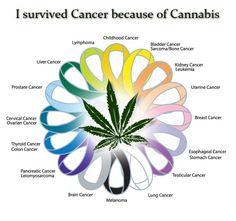 Cannabis cures ♡
