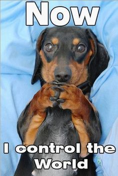 This is truly how a Dachshund thinks ~ Eli knows this is true...