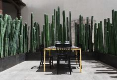 Frida Kahlo #gardening #tips