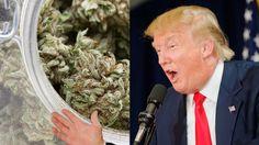 Trump and Cannabis