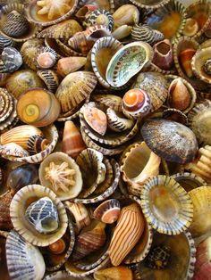 Macro of sea shells from Charlesworth Bay, photo by Brenda Foran