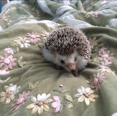 Little cute hedgehog Hipster Vintage, Style Hipster, Cute Creatures, Beautiful Creatures, Animals Beautiful, Animals And Pets, Baby Animals, Cute Animals, Animal Babies