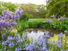 Image result for wetland garden