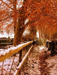 Changing Seasons...Winter has arrived and fall will soon be gone