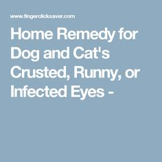 1000 Images About Dog Treatment On Pinterest Fleas