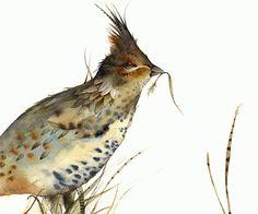 Tétras - oiseaux aquarelle Archives impression