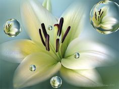 LILIUM by Charo Arroyo on 500px