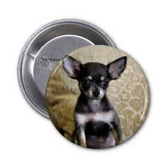 Teacup Chihuahua Puppy Button