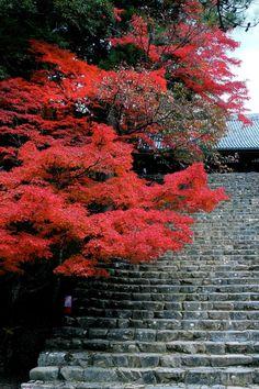 撮影場所 Ukyo Ward, Kyoto Prefecture, Japanで11月に撮影された写真 神護寺1 : パシャデリック