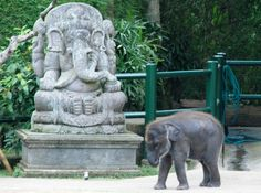 Is Bali paradise? 6 reasons why Bali might be paradise plus a look at the island's problems Garden Sculpture, Lion Sculpture, Bali, Paradise, To Go, Island, Statue, Places, Outdoor Decor