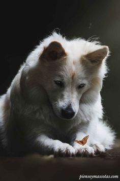 Que lo importante se esconda en tu mirada 😌🐶👀 #piensoymascotas #dog #eyes #dogs_of_pinterest #pet #pets #animal #animals #dogsitting #photooftheday #dogoftheday #lovedogs #lovepuppies #hound #adorable #doglover