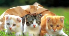Cute Cats and Kittens Pictures and Wallpapers      Cute Funny Kitten Picture     Very Cute Cat and Kitten Picture     Cute White-Brown Ki...
