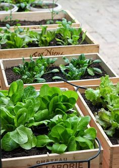 garden, plant box, diy, planter box, diy planter box, vegetable garden
