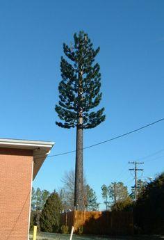 pohon 2