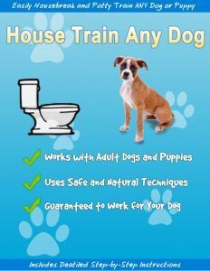 Learn How You Can Potty Train Your Dog In Just 15 An House