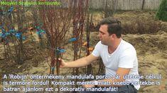 öntermékeny mandulafa vásárlása Megyeri kertészet