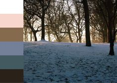 Turfprojects.ie Colour Palette Inspiration Snow in the Botanic Gardens Glasnevin Dublin Ireland