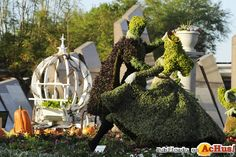 epcot international flower & garden festival - Yahoo Image Search Results