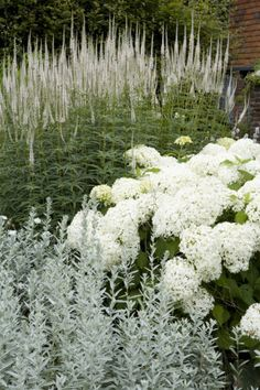 Beautiful combination of Hydrangea 'Annabelle' with Veronicastrum virginicum (Veronica virginica) and Artemesia in the White Garden in July at Sissinghurst Castle Garden, near Cranbrook, Kent