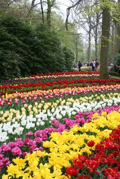 Beautiful Flowers Garden: 31 Best Photos Of Beautiful Flower Garden In The Holland