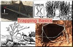 #Survival #Homestead - Trapping Basics