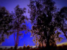 ☄⚡️Snowblind #sky #ice #sunset #free #frozen #blur #purple #tree #Alaska #west #sled