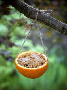 Natural Bird Feeder--1/2 an orange filled with peanut butter and bird seed