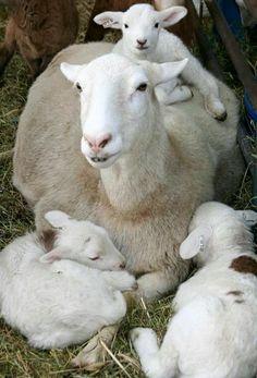 Happy mother....